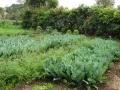 Wie over een waterput beschikt kan mooie oogsten binnen halen